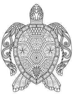 Ausmalbilder Schwer Meeresschildkröte 01