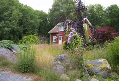 How our cottage in Scandinavia looked when we arrived from Texas after 11 months absence.