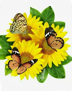 Make Solar Energy Work For You – Solar Energy Advice Beautiful Butterflies, Love Flowers, Beautiful Flowers, Sunflower Pictures, Sunflower Art, Butterfly Quotes, Flying Flowers, Heart With Wings, Planting Flowers