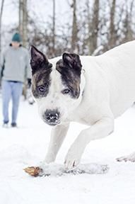 3 / 26     Petango.com – Meet Duncan, a 3 years 3 months Terrier, Pit Bull / Mix available for adoption in Jamestown, NY Contact Information Address  2825 Strunk Road, Jamestown, NY, 14701  Phone  (716) 665-2209  Website  http://www.spcapets.com