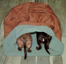 Dachshund Snuggle Bag Paprik #dachshund Snuggle Bag Paprika