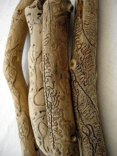 wood carving by scolyte stenograph