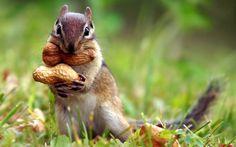 national geographic animal - Google 검색