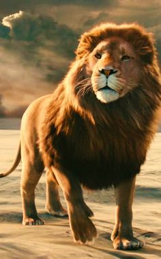 I think of Aslan as the Holy Trinity : God - Aslan created the land of Narnia. Jesus - Aslan died for Narnia. Le Roi Lion Film, Aslan Narnia, Lion From Narnia, Prince Caspian, Lion Of Judah, The Avengers, Chronicles Of Narnia, Cs Lewis, Big Cats