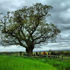 Big Tree :)