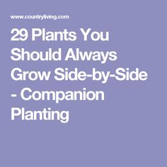 29 Plants You Should Always Grow Side-by-Side - Companion Planting
