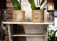 Črepníkové rastliny Planter Pots, Home Decor, Decoration Home, Room Decor, Home Interior Design, Home Decoration, Interior Design
