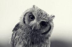 bird, anim, stuff, creatur, natur, beauti, hoot, owls, thing