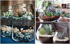 41 Unique Terrarium Glass on The Table Terrarium Plants, Cactus Plants, Succulents In Glass, Decorative Gravel, Terraria, Garden Pests, Easy Garden, Growing Plants, Garden Planning