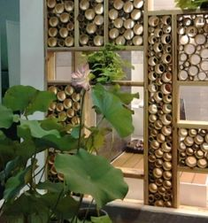 While common in most Asian homes that have enough land surrounding it, bamboo garden are not something that you usually hear about in the American home. Bamboo Poles, Bamboo Art, Bamboo Crafts, Bamboo Fence, Bamboo Ideas, Modern Kitchen Furniture, Bamboo Furniture, Bamboo Landscape, Bamboo House Design