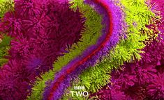 BBC Two, Rebranding mit Animation Bbc Two, Business Card Design, Herbs, Funny Things, Flowers, September, Animation, New Looks, Bloemen