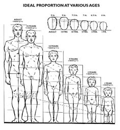 Today's Drawing Class 101: Understanding body proportions || Ideal Proportion at Various Ages For Drawings