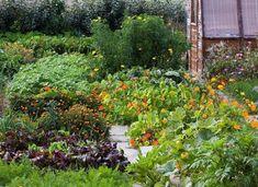 Társnövények, növényi társak - gazigazito.hu Plan Potager, Permaculture, Organic Gardening, Plants, Bio, Corsica, Garden Ideas, Sweet, Garden
