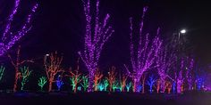 Christmas light show at Aboretum -blown away by just the parking lot