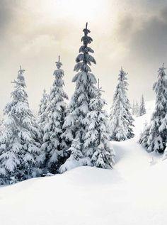 9267 White Christmas Tree Snow Backdrop