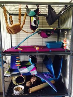 My rats just got new bedding and hammocks.still in love with the critter nation cage.