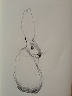 inspire   drawings & illustrations - bunny by asa millholm