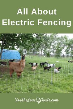 All About Electric Fencing - The Thrifty Homesteader Pasture Fencing, Horse Fencing, Raising Farm Animals, Raising Goats, Breeding Goats, Electric Fence Energizer, Electric Fencing, Barn Animals, Types Of Fences