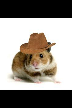 ' likin' my hat partner? '