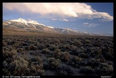 Snake Range and Wheeler Peak raising above Sagebrush, seen from the West, Sunset. Great Basin National Park