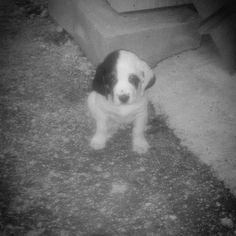 hello puppy....
