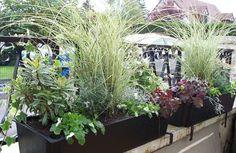 5 raisons de choisir les graminées – Jardinier Conseil Zen, Plants, Garden, Rustic Gardens, Fruit Garden, Garden Stairs, Garten, Planters, Plant