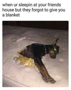 Read these Funny Dog Memes yorkie dog funny dog funny.You can find Yorkie and more on our website.Read these Funny Dog Memes yorkie dog f. Funny Animal Memes, Cute Funny Animals, Funny Animal Pictures, Funny Cute, Funny Dogs, Animal Pics, Memes Lol, Dog Memes, Funny Memes