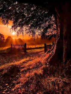 I Like It Natural And Quiet...Always In The Country !... http://samissomarspace.wordpress.com Fotoğrafçılık http://turkrazzi.com/ppost/440719513520916563/