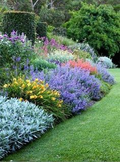 Photo of Herbaceous Perennial Plants in the Garden by randi