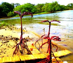 Mangroves Marquette Study Currumbin Creek