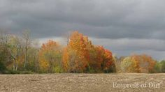 Autumn Field And Trees