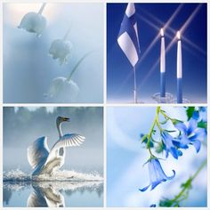 And bluebell is the official flower of my home county, Central Ostrobothnia. White Lilies, My Heritage, Helsinki, Independence Day, Shades Of Blue, Art Lessons, Beautiful Pictures, Lily, Blue And White