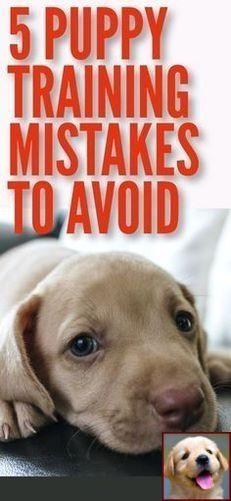 Dog Behavior Shaking Toys And Petco Dog Training Classes Reviews