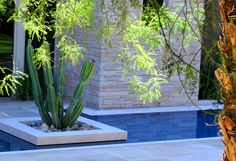 Steve Martino  landscape architect