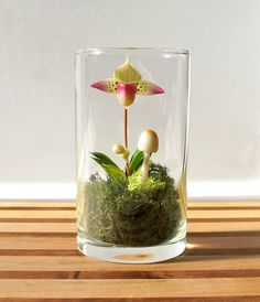 Tiny Lady Slipper Orchid Terrarium by Miss Moss Gifts