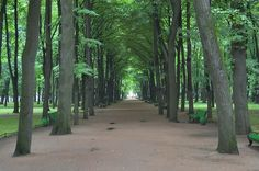 An alley of the Summer Garden in St. Petersburg, photographed by Alexey Sergeev in 2005