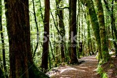 Kahurangi National Park Scene, New Zealand Royalty Free Stock Photo Wooden Path, Abel Tasman National Park, The World Race, Forest Bathing, Photography For Sale, New Zealand Travel, Turquoise Water, Abstract Photos, Travel And Tourism