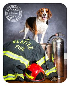 Bishop - April 16 - Beagle. Thank you to all the men and women fire fighters out there!