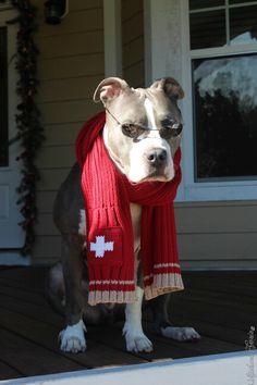 Winter dog....