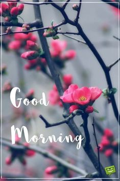 Are you looking for inspiration for good morning handsome?Browse around this website for unique good morning handsome ideas. These enjoyable pictures will you laugh. Good Morning Winter, Good Morning For Him, Good Morning Handsome, Good Morning Picture, Good Morning Flowers, Morning Wish, Gud Morning Images, Good Morning Beautiful Images, Good Morning Messages
