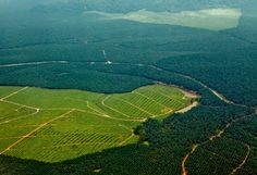 C'est quoi, la déforestation ?