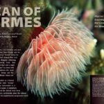 "CORAL New Issue ""VERMES"" Inside Look"