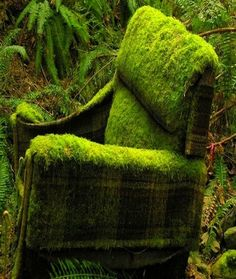 Nature turns abandoned chair into a mossy garden beauty. could make this out of chicken wire and soil with moss spread on top to grow