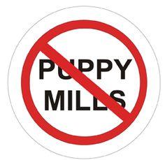 stop puppy mills   Texas veterinary organization opposes bill to stop puppy mills in ...