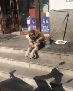 Cute Overload: Internet`s best cute dogs and cute cats are here. Aww pics and adorable animals. Cute Funny Animals, Cute Baby Animals, Funny Dogs, Animals And Pets, Cute Puppies, Cute Dogs, Dogs And Puppies, Cute Babies, Cute Animal Videos