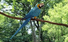 2017-03-03 - blue and yellow macaw backround: High Definition Backgrounds, #1920256