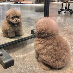Cute Little Animals, Cute Funny Animals, Funny Pets, Fluffy Puppies, Cute Puppies, Fluffy Animals, Animals And Pets, Baby Dogs, Pet Dogs