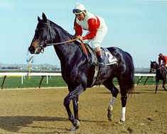 Ruffian, the most beautiful, courageous horse ever. I bawled like crazy as a child when she died. When Eight Belles met a similar fate at the Derby a couple of years ago, I fell to the floor crying, Not Again. RIP, beautiful girl. If I ever have my own horse to love, she will be named Ruffian for you.
