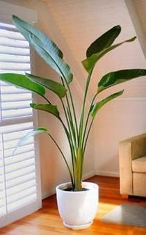 Feng Shui Plants- Plants bring a life force into the home and help to keep the air fresh. Plants make a space look alive!