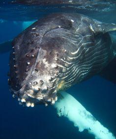 MAYOTTE - Baleines à bosses | Schöffel